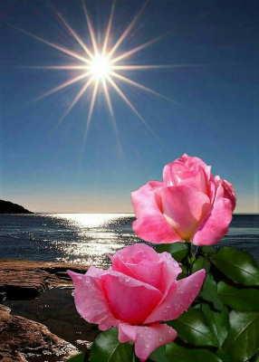 enviar ramos para funerales, flores funeral, flores funerarias
