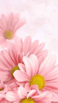 Comprar Centro de Flores Online, Floristería de Altea, Flores y Cestas de Frutas para Regalar, Regalar Flores en Altea, Enviar Flores en Altea
