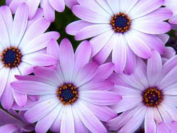 Ramo Flores Grecia, Floristería Online, Ramos de Regalo, Floristas Profesionales, Enviar Flores Urgentes,Comprar Flores en Altea