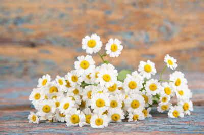 tienda de flores online, ramos de flores online, ramos a domicilio, ramos de flores para nacimiento, plantas para el hospital, plantas para un nacimiento
