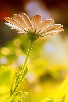 Flores cumpleaños, cestas de frutas, centros de flores para Altea, Cestas de Flores urgentes en Altea