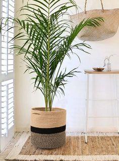 Planta Anthurium, Planta de Interior, Regalar una Planta, Floristería Online, Flores a Domicilio, Floristería Aitana Natura