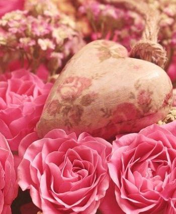 Rosas regalar flores